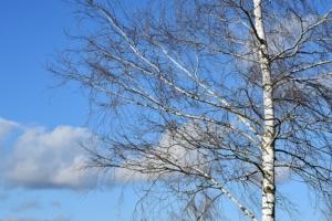 birkenholz preiswert als brennholz kaminholz kaufen