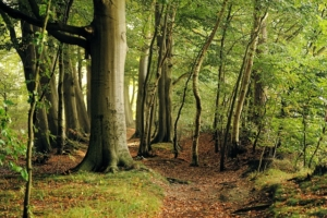 buchenholz als brennholz kaminholz kaufen