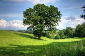 eichenholz günstig als brennholz kaminholz kaufen