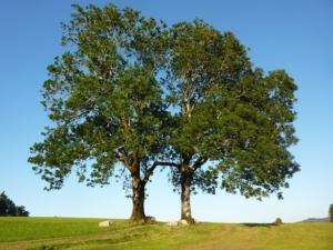 eschenholz günstig als brennholz kaminholz kaufen