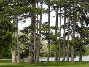 günstiges brennholz kaminholz kaufen in sachsen-anhalt