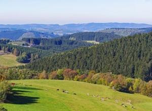 hochwertiges brennholz kaminholz kaufen in nordrhein-westfalen