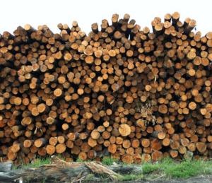 kaminholzpreis brennholzpreis günstig