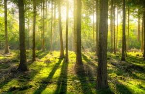 wald für brennholz kaminholz in deutschland