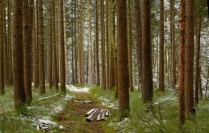 Gewachsenes Fichtenholz zum Herstellen von Kaminholz