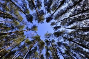Kaminholz Ratgeber Wald als Holzlieferant