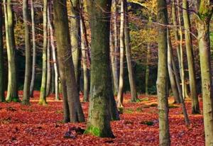 buchenholz als kaminholz