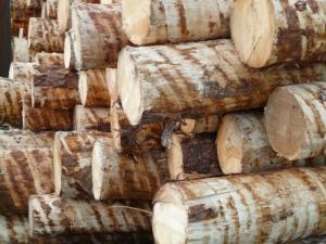 tannenholz scheite als kaminholz